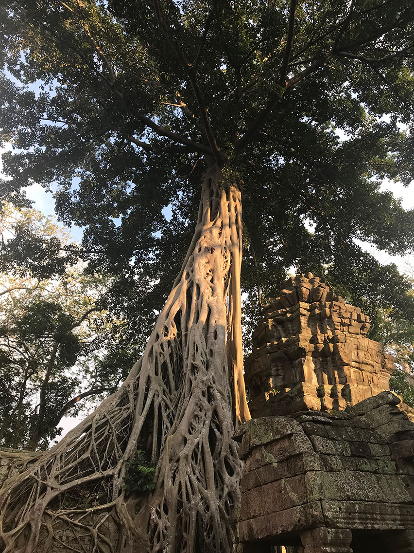 Ta Prohm Temple, Near Siem Reap, Cambodia.