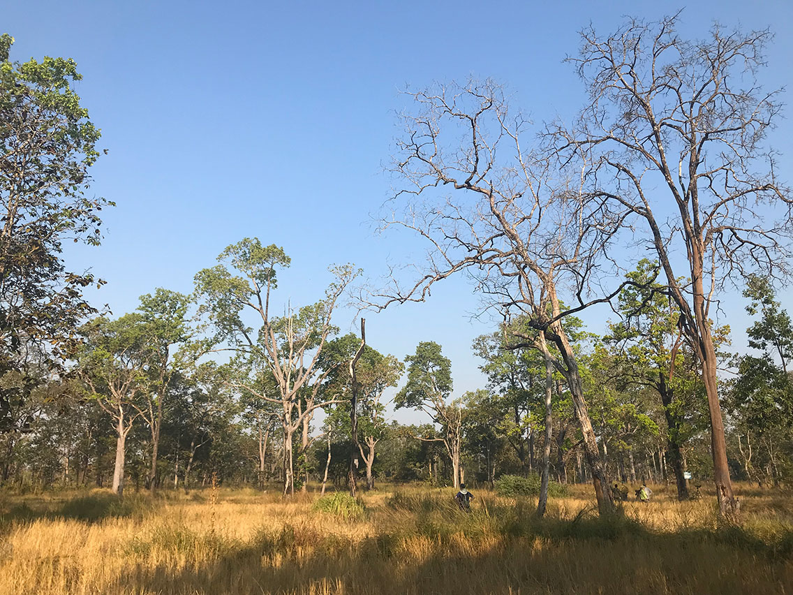 Birding in the dry dipterocarp forest , Tmatboey, Cambodia.