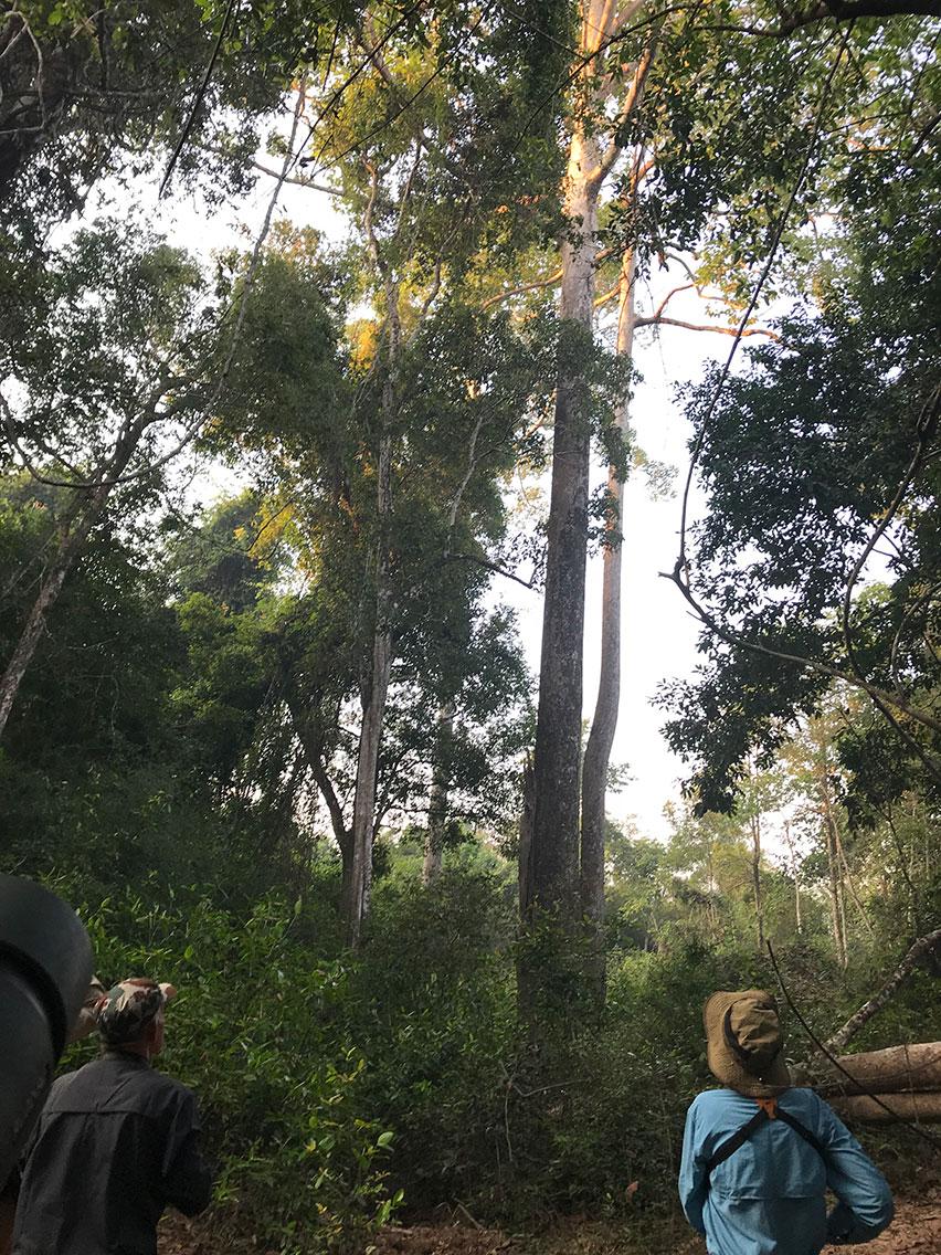 Birding in the forest, Tmatboey, Cambodia.