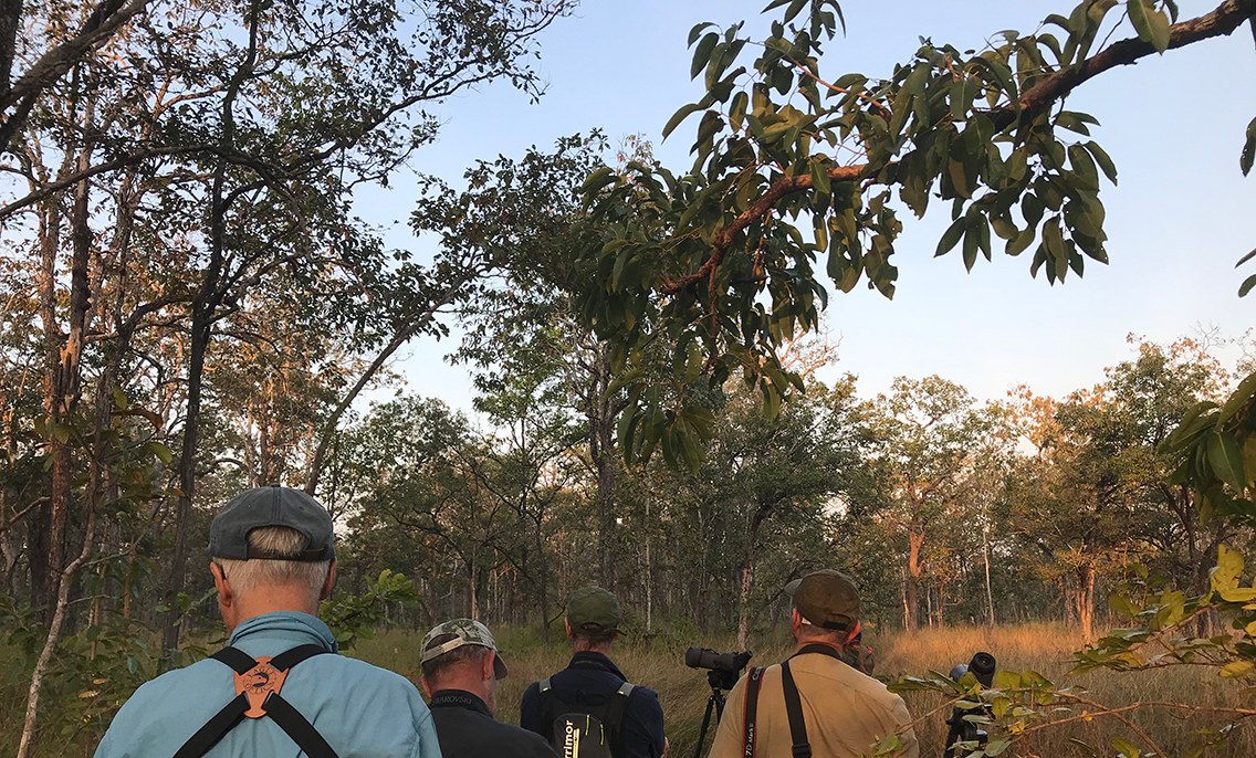 Birding in the forest near the Vulture hide, Boeng Toal, Cambodia.