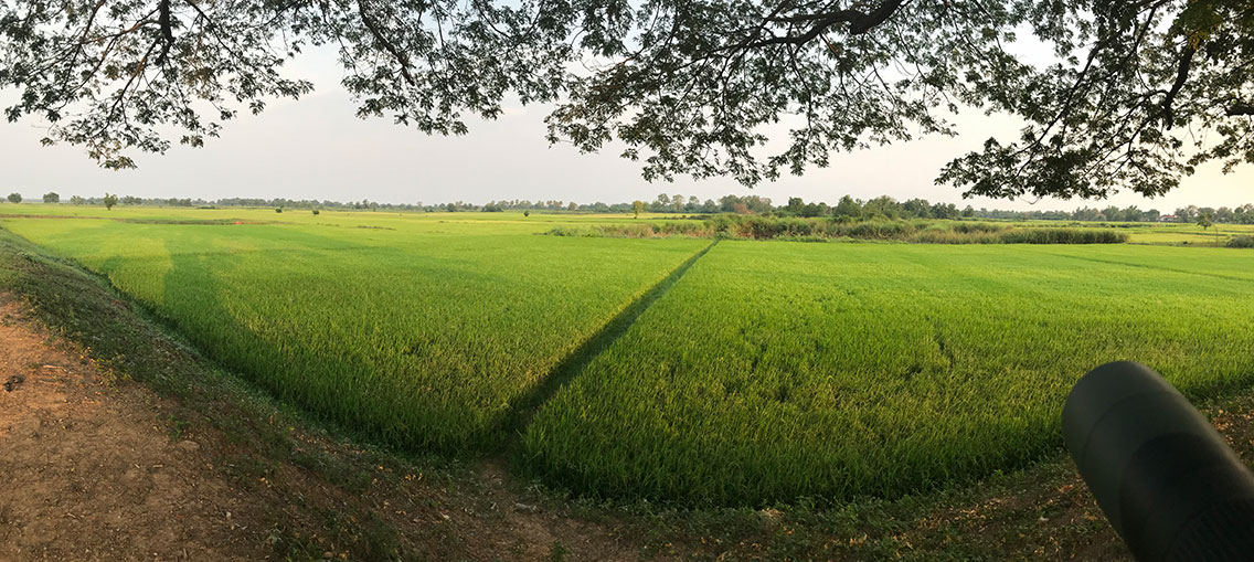 Kratie wetlands and rice paddies, Near Kratie town, Cambodia.