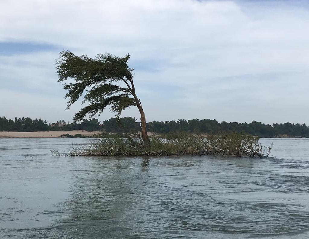 Typical Mekong Wagtail habitat on the Mekong River, Kampi, Cambodia.