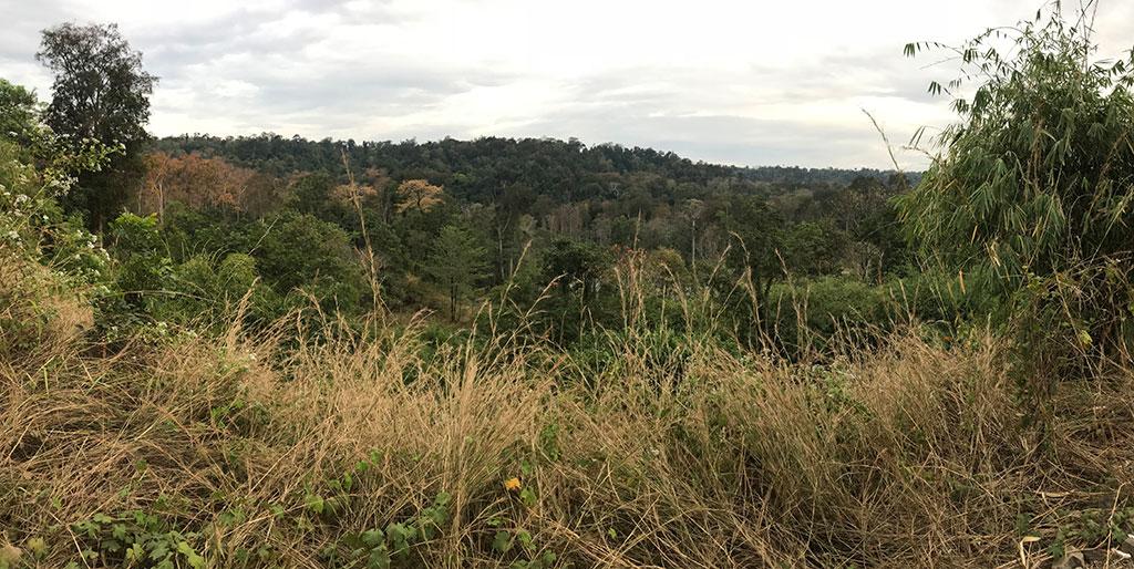 Forest at Keo Seima where Green Peafowl roost, Mondulkiri Province, Cambodia.