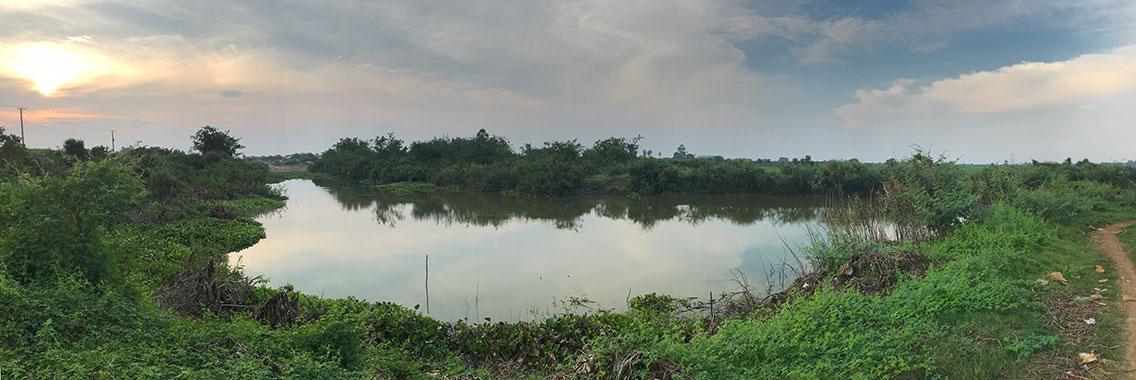 Cambodian Tailorbird habitat, Near Udong, Cambodia.