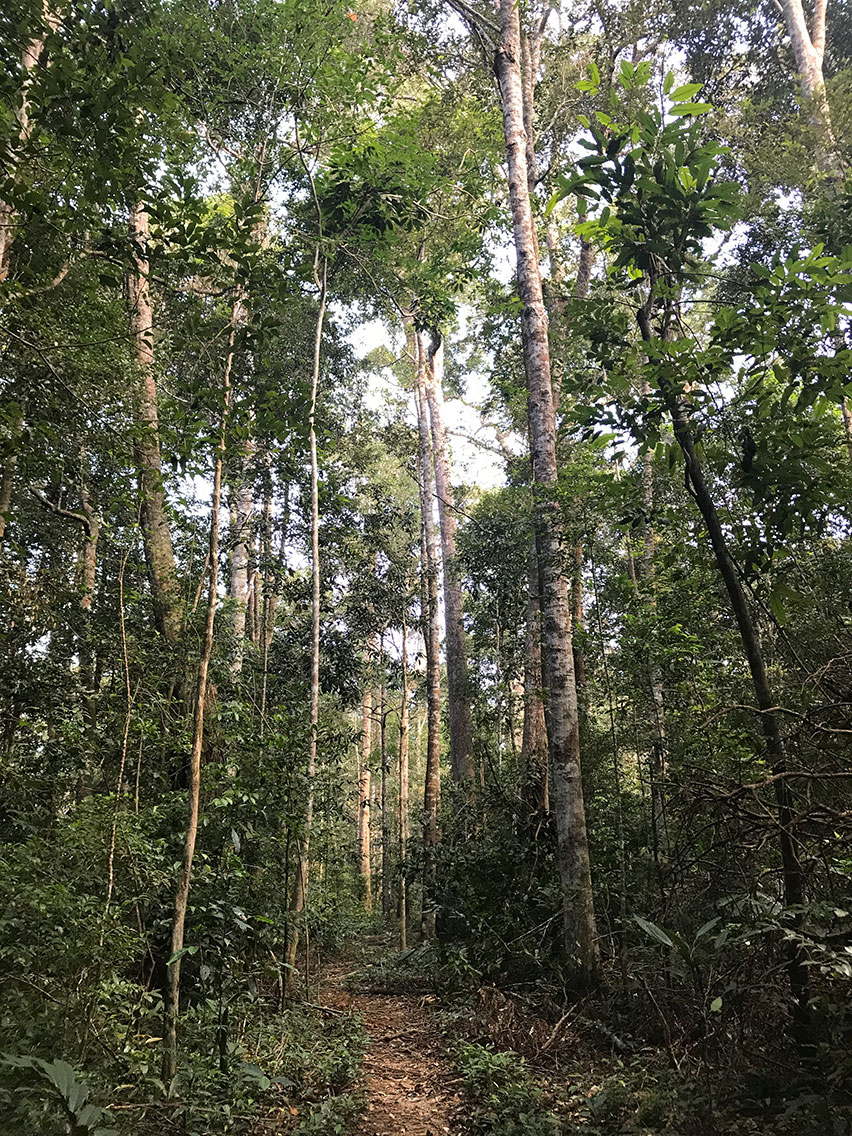 Typical forest and trail, Mount Aural, Cambodia.