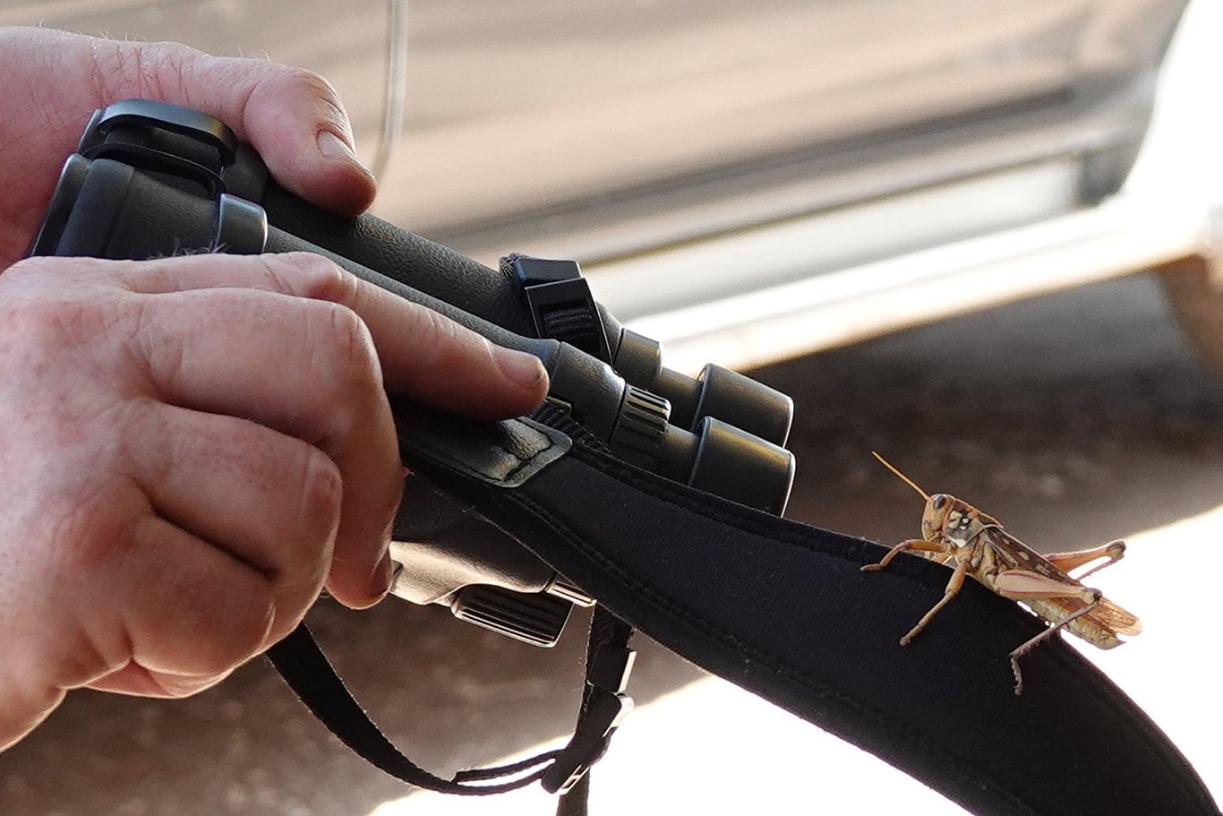 Grasshopper on Binoculars, Unknown location, Senegal.