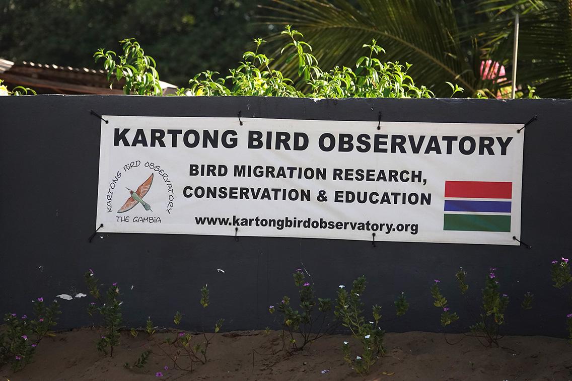 Kartong Bird Observatory, Kartong, The Gambia.