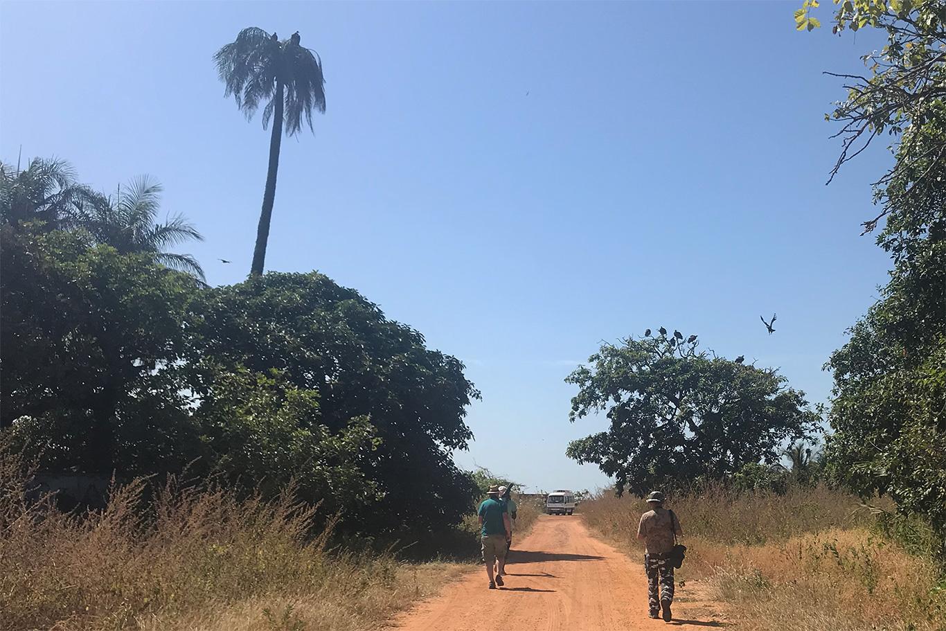 Birding in Kartong near the beach, Kartong, The Gambia.