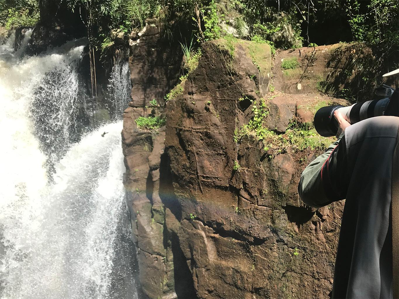 Photographing Great Dusky Swifts in Iguazú, Parque Nacional Iguazú, Argentina.