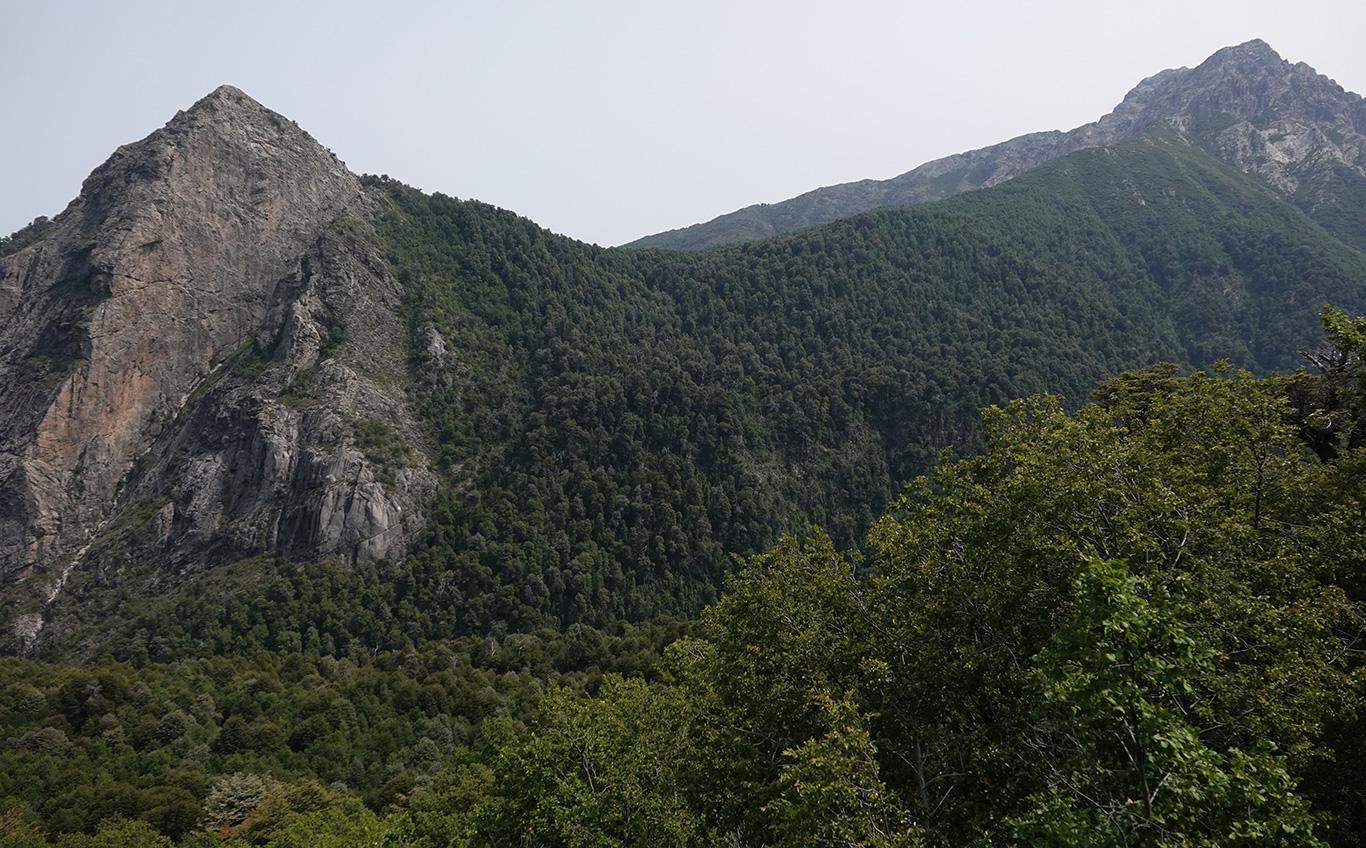 View of Forest, Altos De Lircay, Chile.