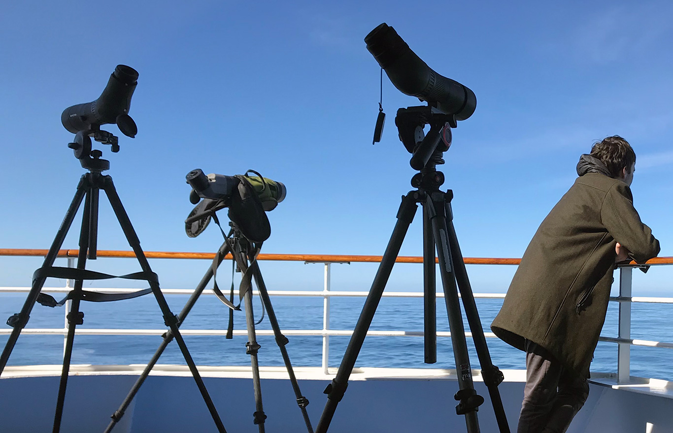 Seawatching in the South Atlantic, At sea, c. 600km east of Argentina, north of The Falklands, South Atlantic Ocean.