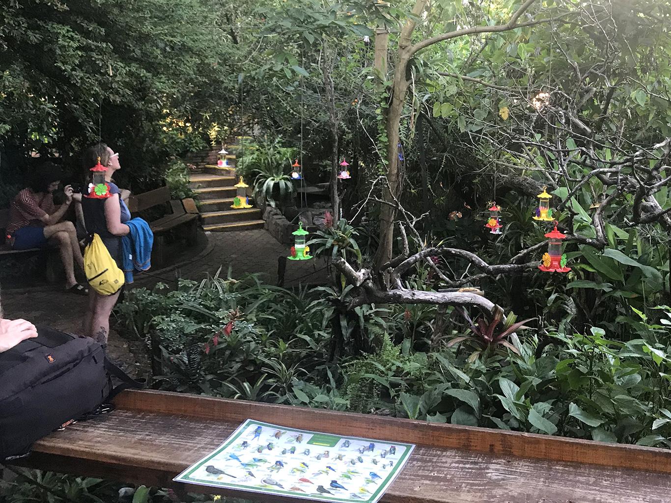 Jardin de Picaflores (Hummingbird Garden), Puerto Iguazú, Argentina.